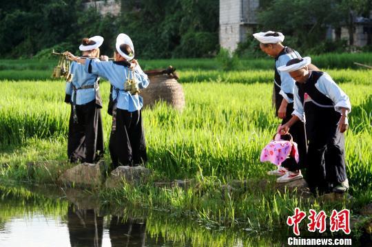 """布依族传统音乐演奏:口传心授中的""""民族记忆"""""""