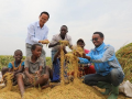 Chinese hybrid rice in Burundi has bumper season